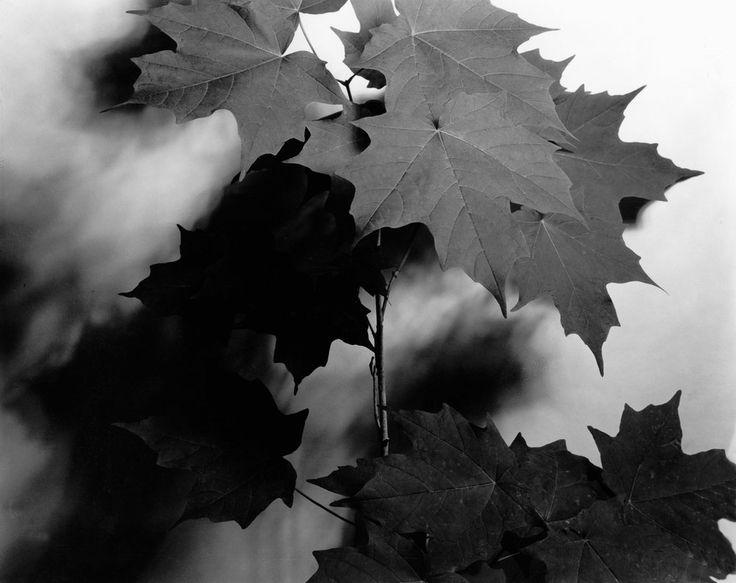 черные листья картинки драйве есть