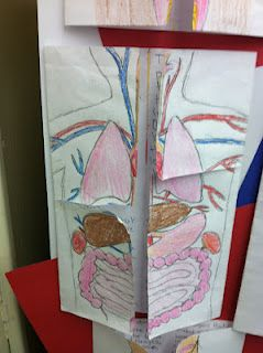For a human body lesson, I could utilize this foldable to create a fun and engaging project for students. This can either be used during Phase 1 as an introduction hook for students and/or could be used during Phase 3 as an evaluation tool. Students create the foldable by drawing the organs on the front and writing about them on the inside flaps.