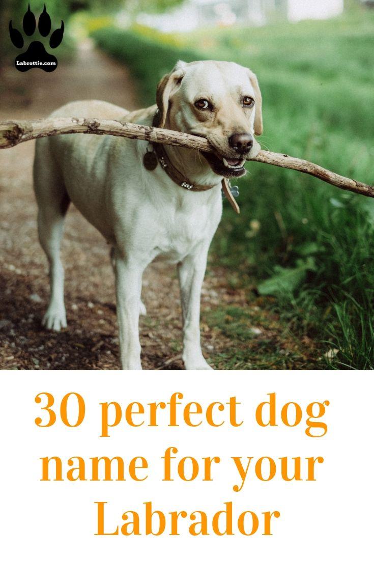 430 Boy Dog Names A Z Labrottie Com Dog Names Dog Names Unique Funny Dog Names