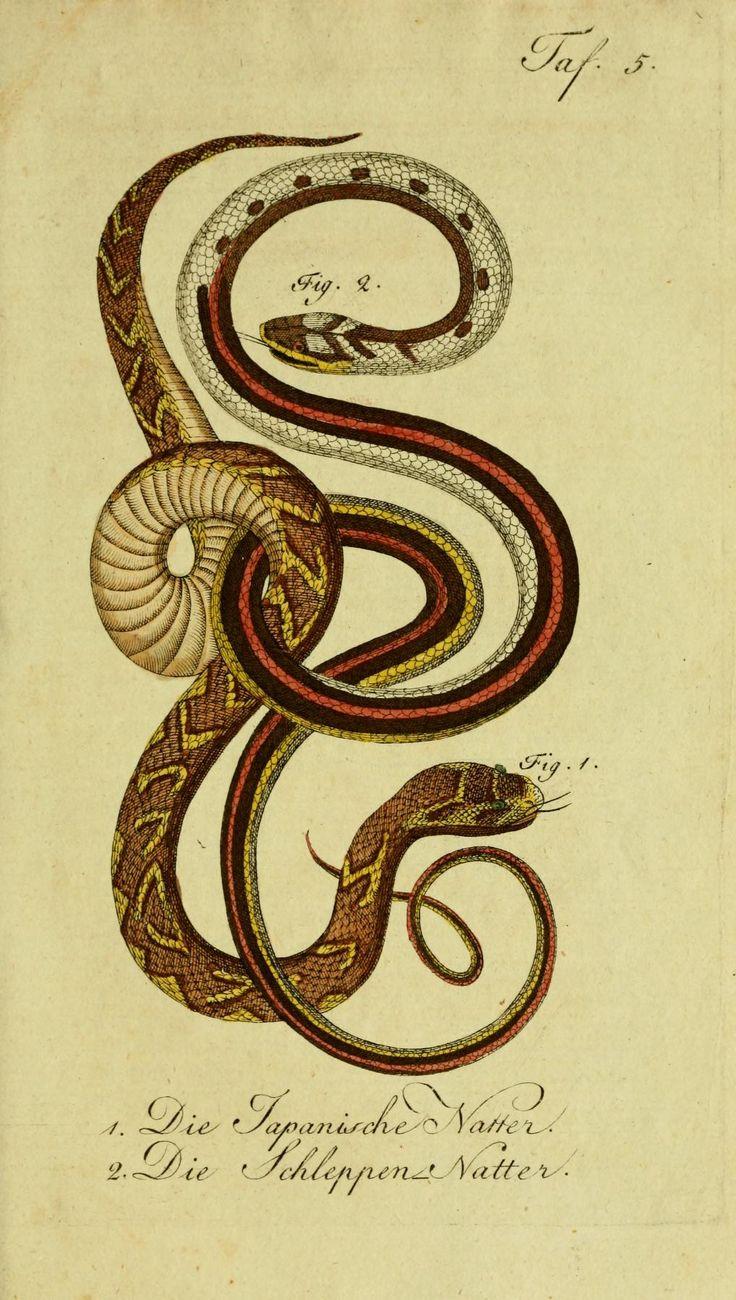 Herrn de la Cepede's Naturgeschichte der Amphibien, 1800-1802