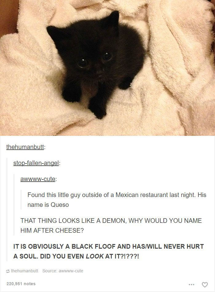 20+ Cat Posts On Tumblr That Are Impossible Not To Laugh At