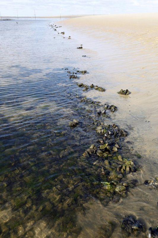 Les pluies acides hno3 développent les bactéries dans le bassin d'Arcachon