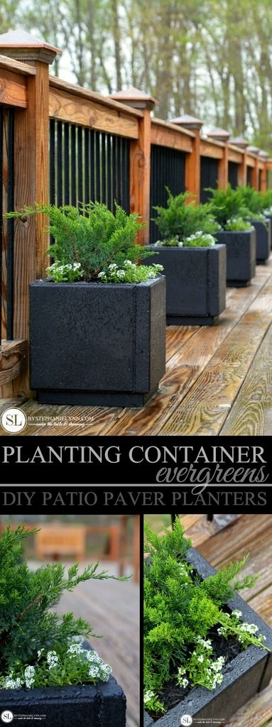 Planting Container Evergreens - DIY Patio Paver Planters @miraclegro #ad #readysetgro