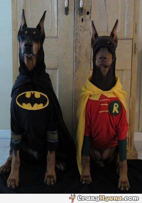 Batman and Robin - Bark knight rises.