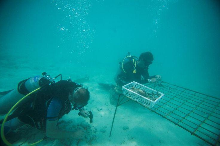 An explorer's paradise! #vivantabytaj #vivanta #coralreef #maldives #adventure #explore