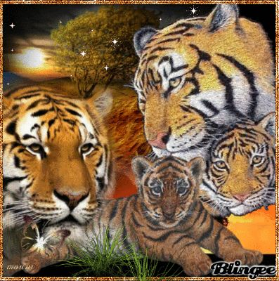 Blingee tigers | Blingee was created with Blingee Plus! Upgrade now! Install Blingee ...