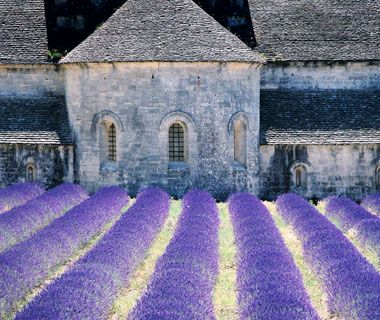 Buildings with glowing lavender fields
