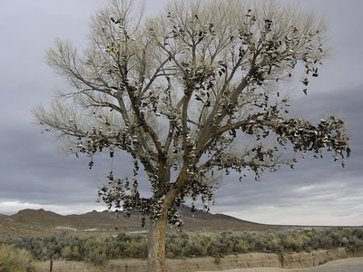 The Nevada shoe tree stands in central Nevada (between Fallon & Austin) with hundreds of shoes on it. Though no one knows exactly how this shoe tree got started, but is said to be originated sometime in the mid 80s.