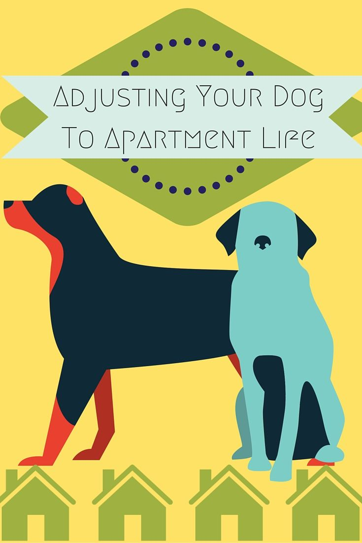 Whether you have a big Pitbull or a miniature Yorkie, moving your dog into your apartment from a larger home can be a challenge with both space and your schedule. Here are tips for adjusting your dog to apartment life | Living In An Apartment