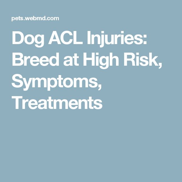 Dog ACL Injuries: Breed at High Risk, Symptoms, Treatments