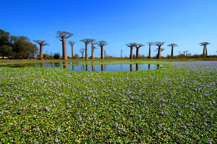 Explore the amazing #Madagascar... Photo on s-ge.com #VarietyCruises