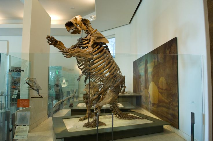 Extinct giants, such as the American cheetah and ground sloth, lived in North America until they mysteriously died out about 10,000 years ago.