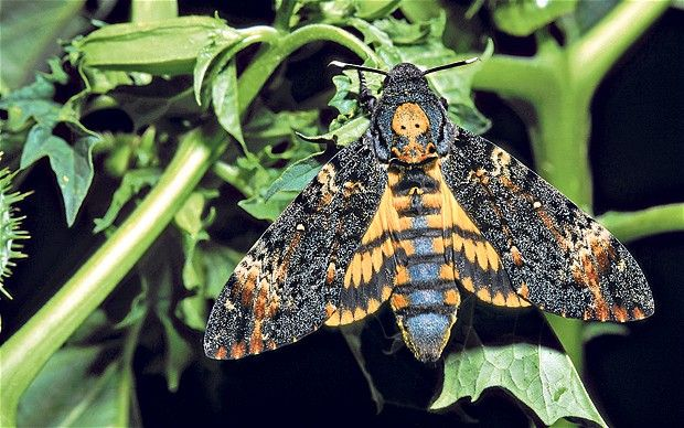 Death of the Moth: Analysis of Loss and Death