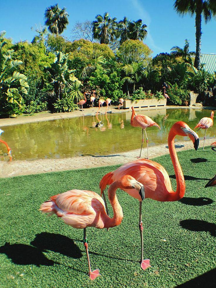 Check This Out Hi! Taking Photos Hello World Wildlife Seaworld Seaworld San Diego Flamingo Flamingo At The Zoo SFK Sfk405 Animals Unique