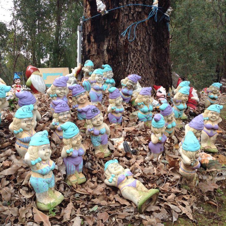 Blue and Purple Lady Gnomes // Bunbury, Western Australia