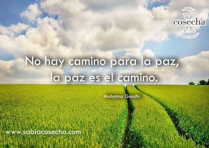 """""""No hay camino para la paz, la paz es el camino"""" Mahatma Gandhi Bonito día :) Procuremos la paz mundial www.sabiacosecha.com #Organic #quotes #sabiacosecha"""
