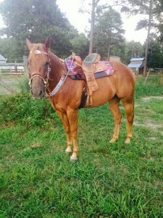Barrel /rope horse for sale nc craiglist