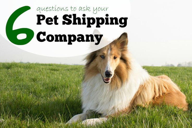 6 questions to ask your pet shipping company when exporting your dog or cat overseas. Advice on transporting your pet to another country.
