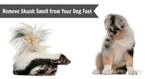 how to get the smell of skunk out of house