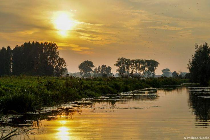 Le Marais audomarois, à Serques (Pas de Calais, Pays de ...