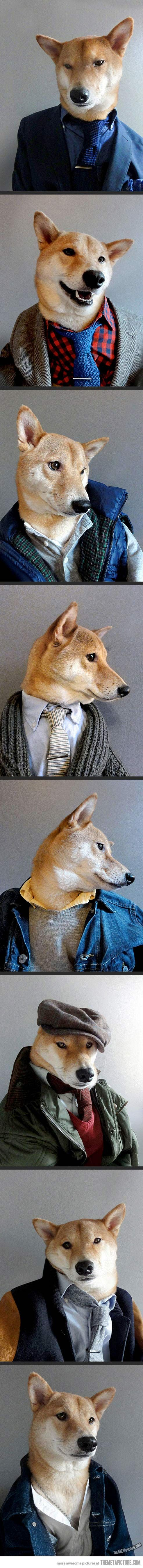 Menswear Dog… Kudo to the Photographer & handsome CANINE model.