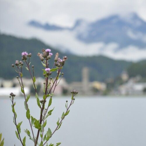 Wake up, and live. #love #lake #mountain #lake