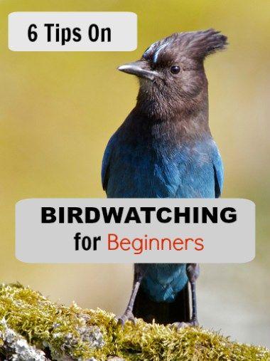 Birdwatching for beginners.