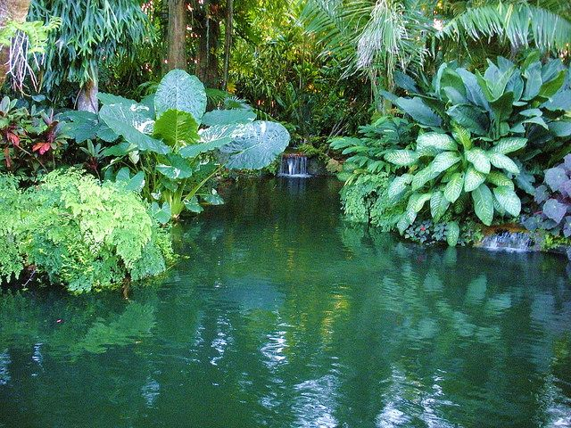 17 best images about natural pool swim pond on pinterest for Tropical pool gardens