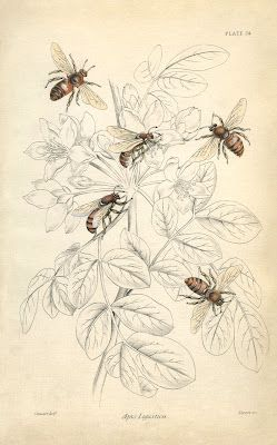 83 Best Images About Bees On Pinterest