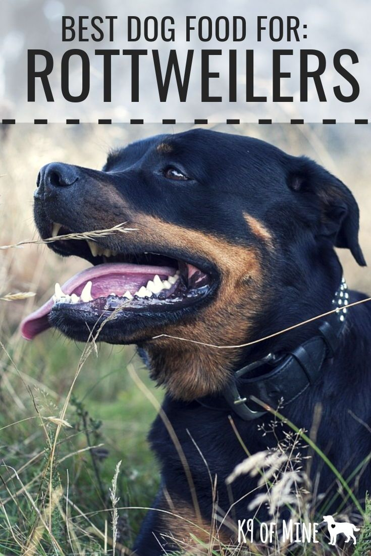 5 Best Foods For Rottweilers Recipes For Your Black And Tan Pup