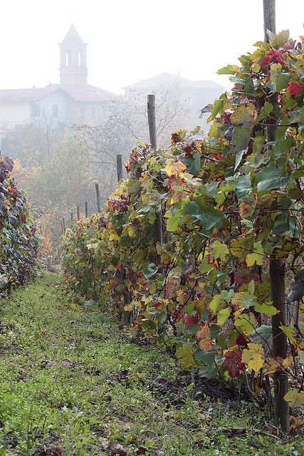 Autumn in the Monferrato, Piemonte, Italy - the home of Italy's noble wines: Barolo, Barbaresco, Barbera, Dolcetto, Nebbiolo - a 'must visit' for wine lovers! Beautiful countryside, beautiful villages, beautiful wines