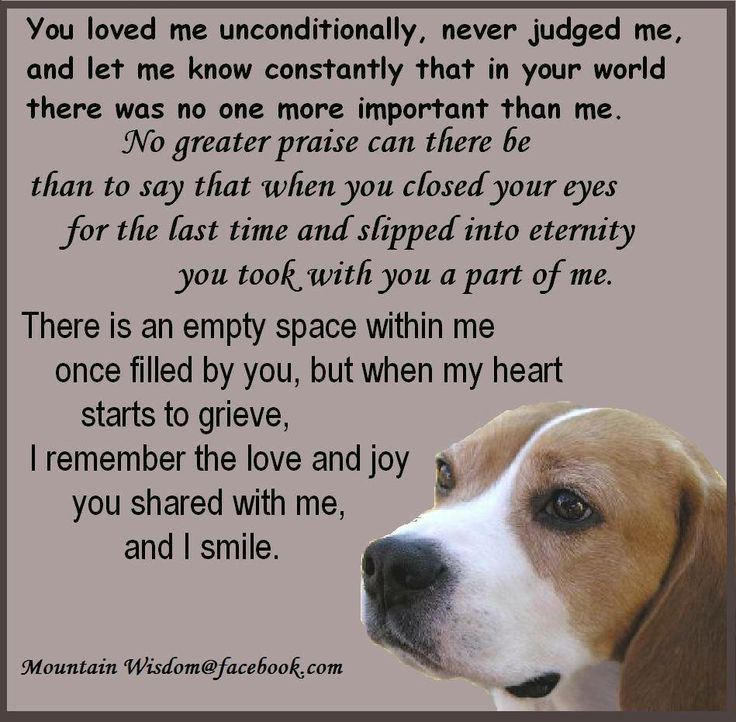 Loss Of A Pet Quote Interesting 40 Best Loss Of Pet Images On Pinterest  Loss Of Pet Pet