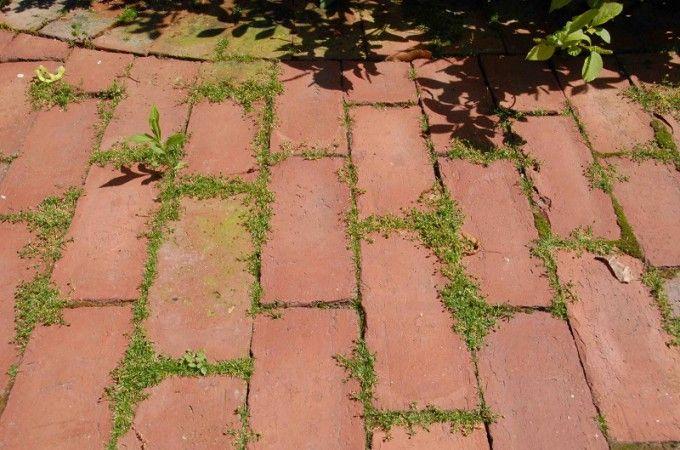 Solution bio contre les mauvaises herbes trucs et - Desherbant bicarbonate vinaigre ...
