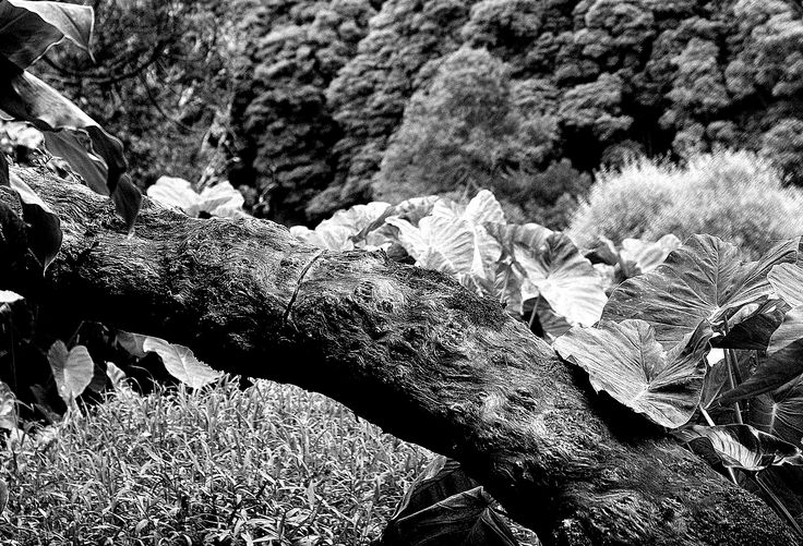 Ilha das Flores - Poço da Alagoinha