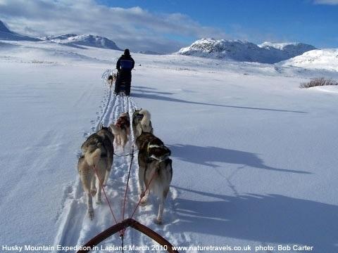 Husky Mountain Expedition in Lapland province.  Cabins and Activities in Saariselkä http://www.saariselka.com
