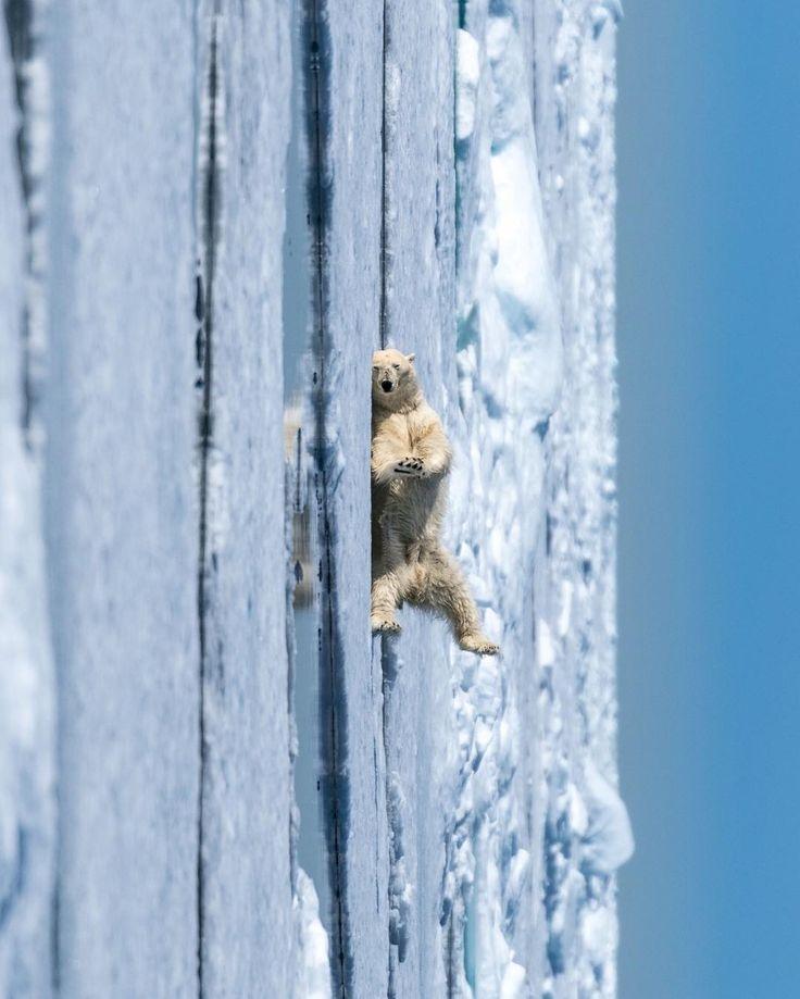 Dancing into the weekend! 🕺😜 #GangamStyle #heysexylady Isn't he cute? 😍 Having fun all by himself! 😂 #foreveralone #tgif #fridaymood #sonya7RII #Arctic #NorthPole [ Location: Svalbard, Norway ] #BurnTheBucketlist 🔥 Follow us on Facebook or Instagram @burn_the_bucketlist 😉