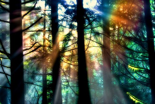 Magical - like a stained glass panel ... Natural Light, North Vancouver, Canada -photo via scene
