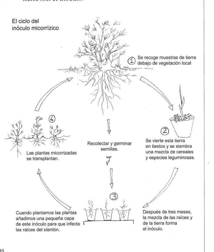 Las Micorrizas, los biofertilizadores naturales del suelo | ECOagricultor