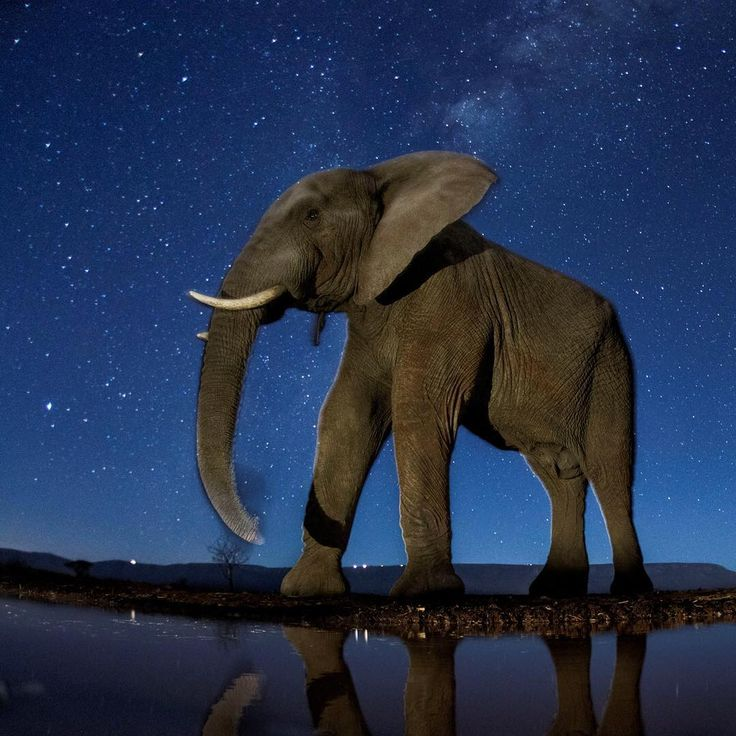 13 FEB: This image of an African elephant pictured under a starry sky is just one the photos recognised in the 2017 World Press Photo Awards. The shot, taken by Bence Mate won third prize in the Nature (Stories) category.  The World Press Photo awards have been running since 1955. This year, the jury awarded prizes in eight categories to 45 photographers from 25 countries.  An image of the assassination of Russia's ambassador to Turkey, Andrei Karlov, won the overall first prize. Taken on 19…