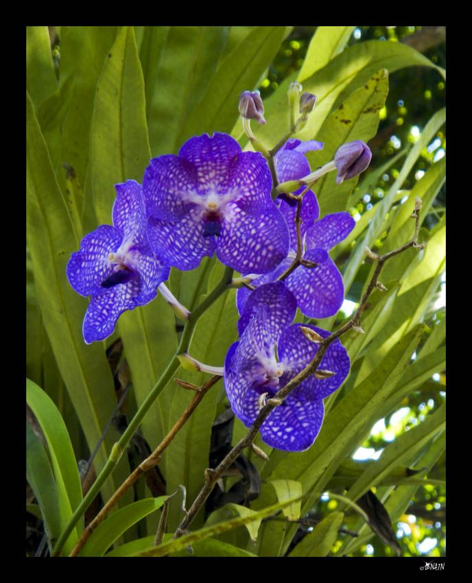 basket nike bleu homme zagreb coreopsis perennials