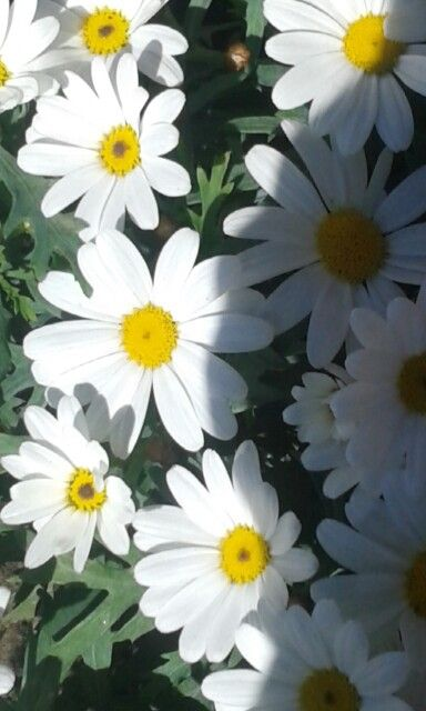 Flowers♡♡