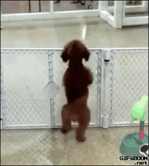 Keep your pets safe and secure with a baby gate! - http://www.entirelypets.com/5-panel-walk-over-wood-gate.html?utm_source=facebook&utm_medium=web&utm_campaign=epfbpostinstavideo