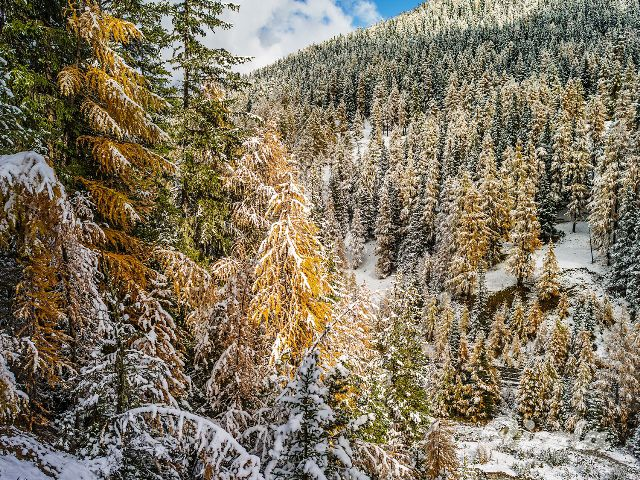 #Switzerland #Winter #Forrest #Alps #Ricola