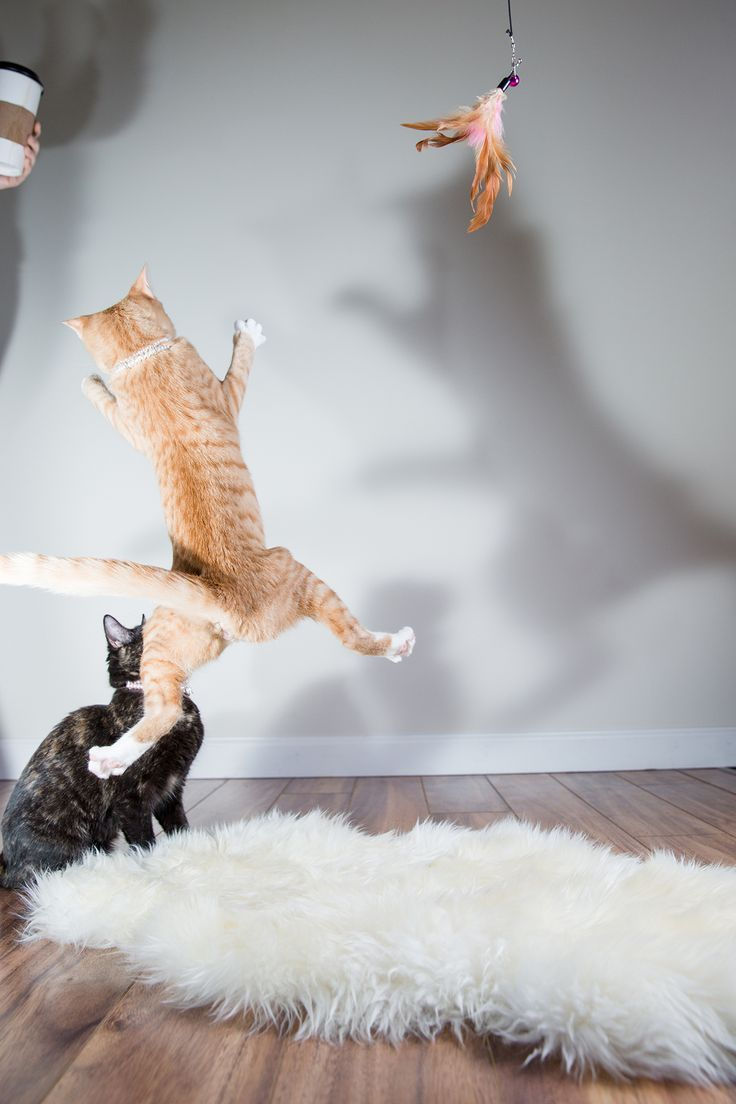 The Comedy Pet Photography Awards Is The Competition We Never Knew We Needed Cats Animal Photography Warrior Cats Books