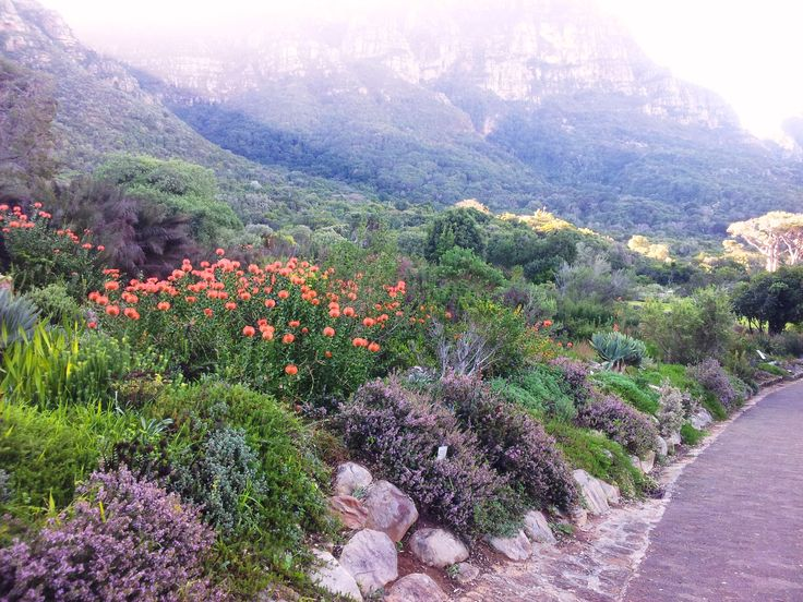 fynbos gardens in cape town - Google Search