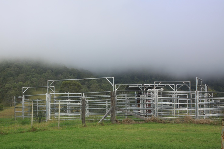 Cattle Yards in the Mist