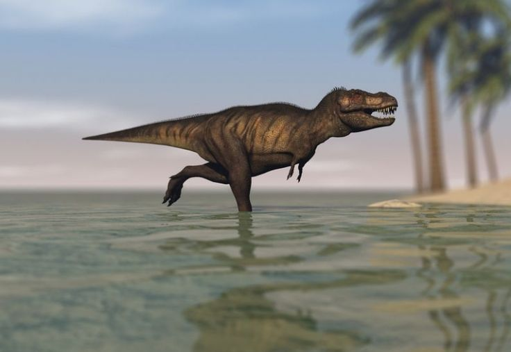 Tyrannosaur that Swam in the Shallow End