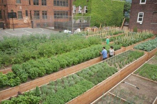 Top 5 Urban Farms In New York City Raised Beds 400 x 300