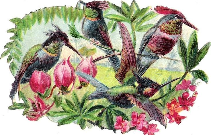 Oblaten Glanzbild scrap die cut chromo Vogel bird  Kolibri exotic
