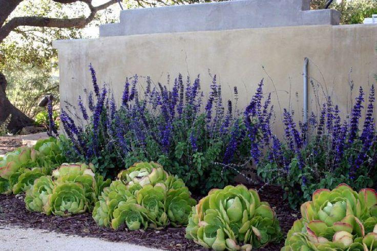 Salvia in gradina, Foto Carson Douglas Landscape Architecture